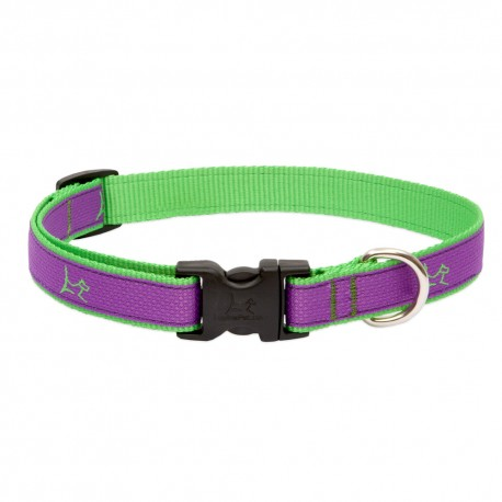 "Collar 3/4"" Hampton Purple - Envío Gratuito"