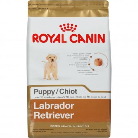 Labrador Retriever Puppy - Envío Gratuito