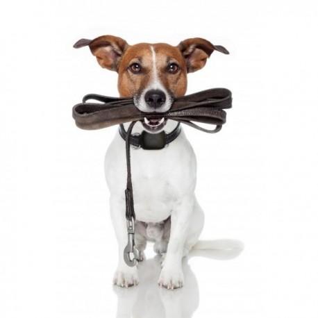 Watch-U Pets Localizador GPS - Envío Gratuito
