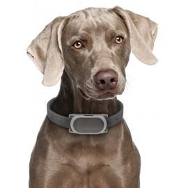 Collar Anti Ladrido Bark 100